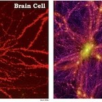 galaxy-nerve-cell