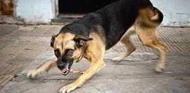dog-attacks