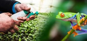 animal-frog-amphibians-pesticides-735-350