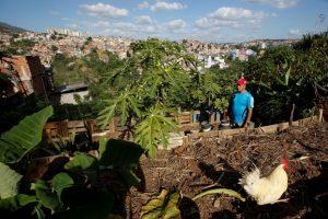 venizualian-garden-and-chicken